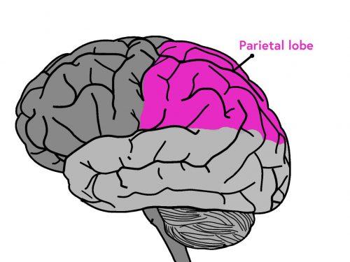 脳のメカニズム